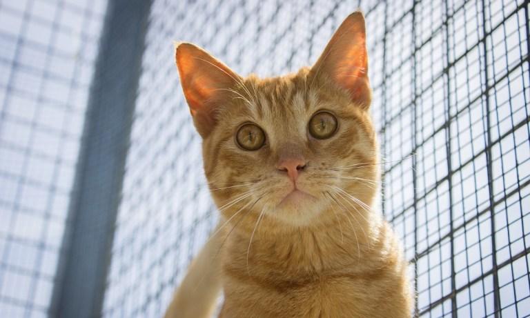 adoptar un gato en Zaragoza