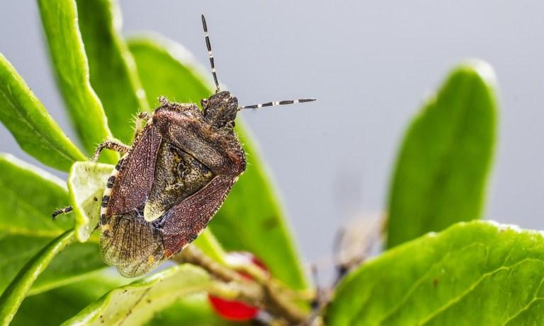 cómo protegen su alimento los escarabajos enterradores