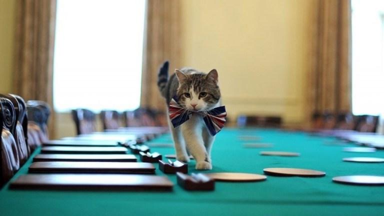 Larry el gato lleva 10 años al servicio de Downing Street