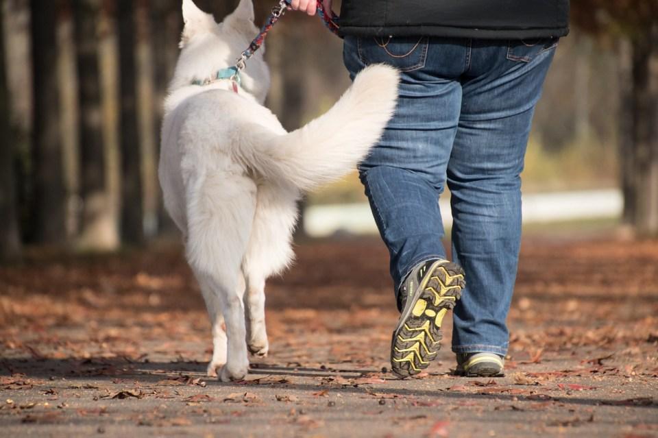almohadilla de perro agrietada