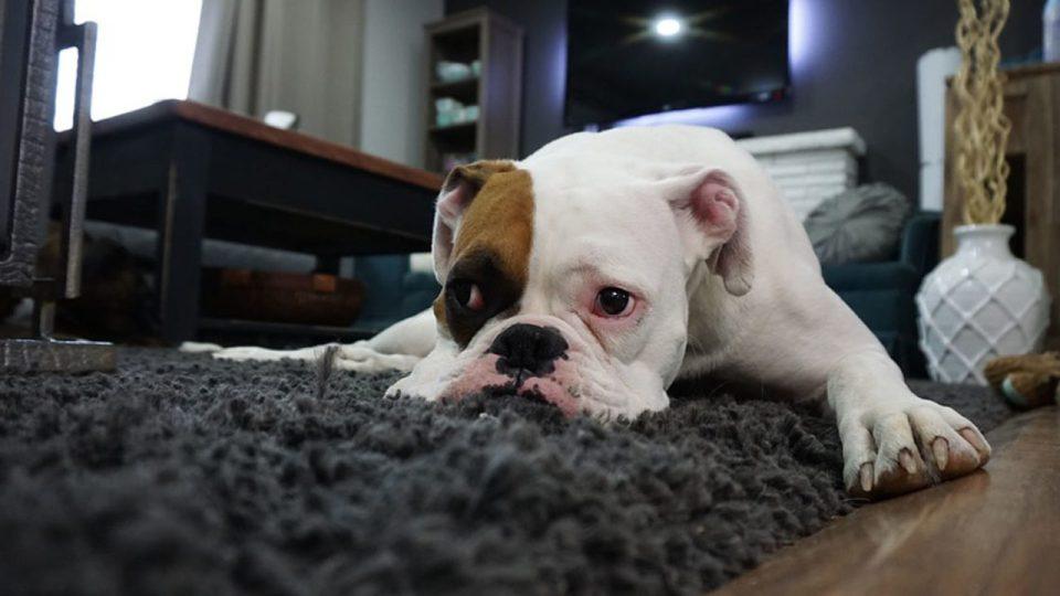 dejar el perro solo en casa