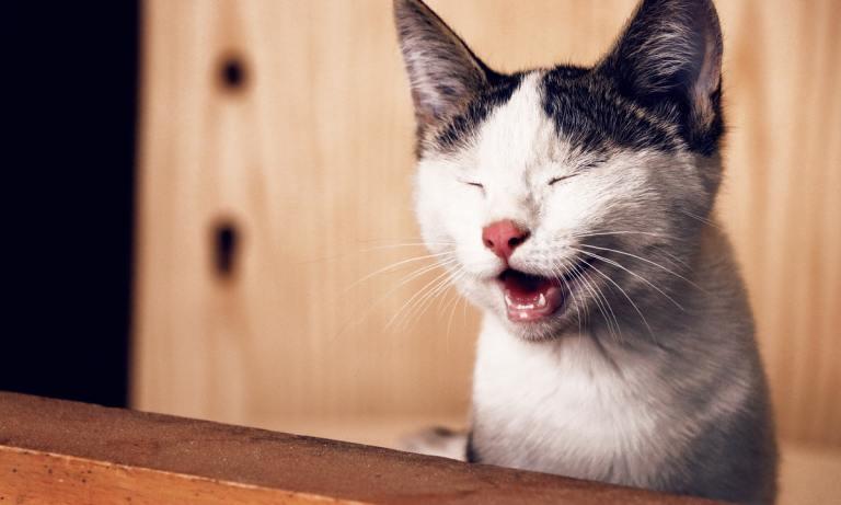 Tener un gato en casa trae buena suerte, según muchas culturas