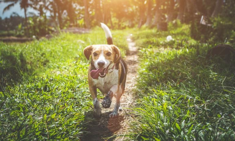 ¿Cuál es el mejor pienso hipoalergénico para perros?