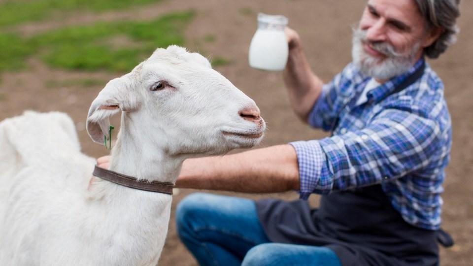 tener cabra en casa