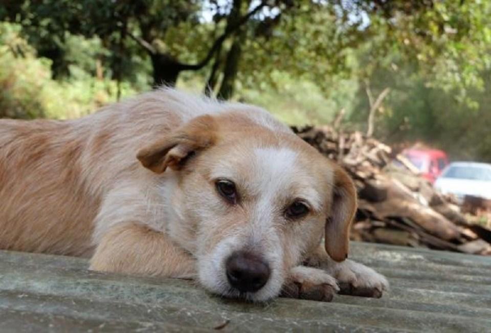 Para adoptar un perro en Galicia desde Biosbardos solo tienes que entrar a su página web