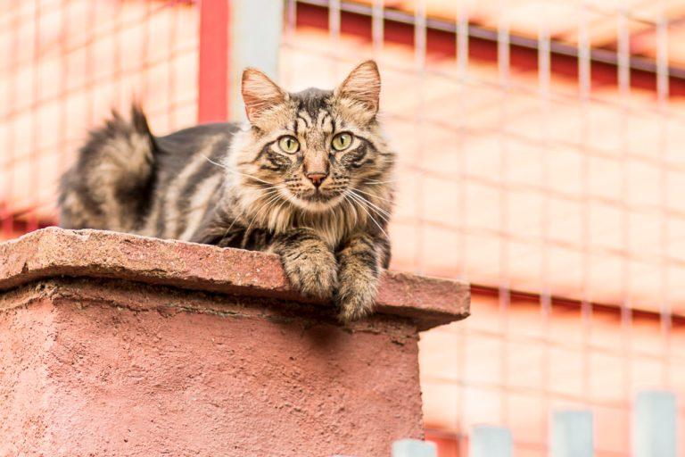 adoptar un gato en Burgos