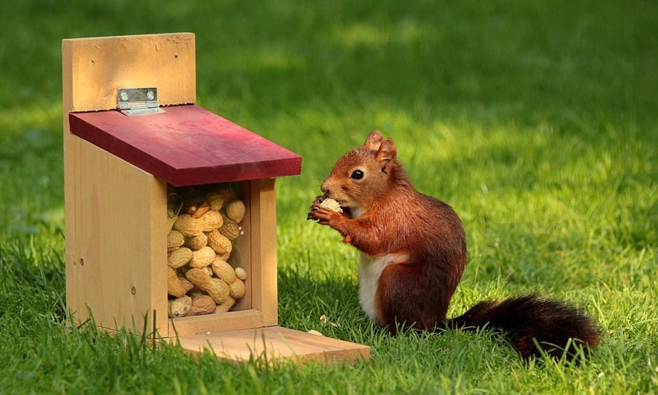 Principales alimentos que suelen consumir estos pequeños roedores