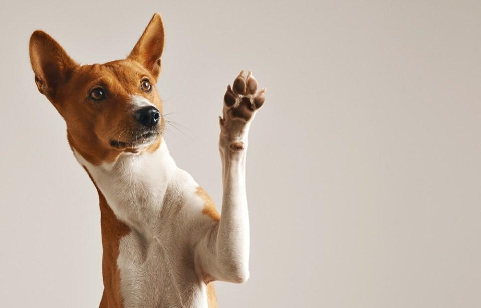 hoteles que admiten mascotas en España