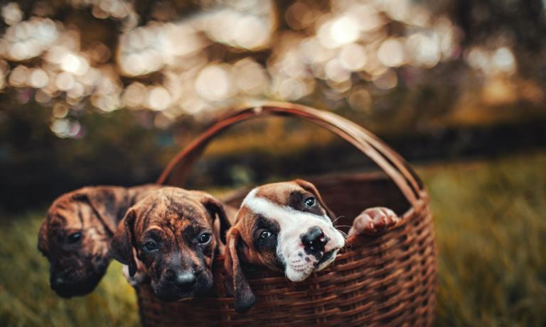 En España puedes contactar con algún cementerio de mascotas para cuando ese día llegue
