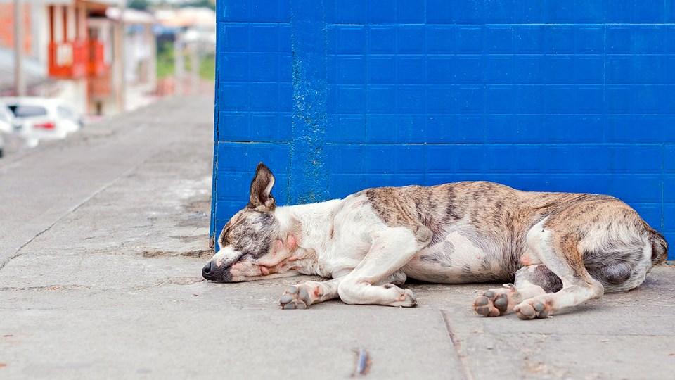 adoptar un perro en Málaga