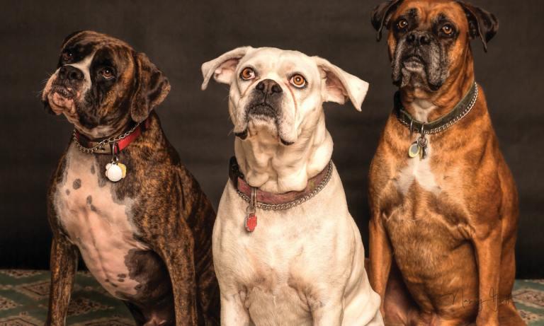 El seguro para mascotas es obligatorio en Madrid y País Vasco