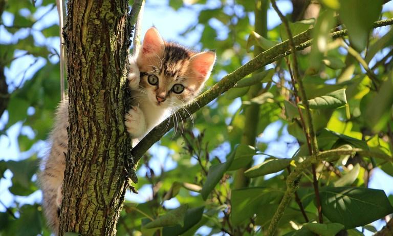 Plantas tóxicas para gatos más comunes