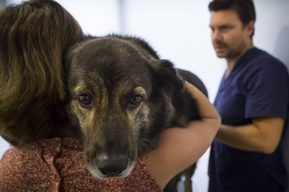 síntomas cáncer de mama en perros