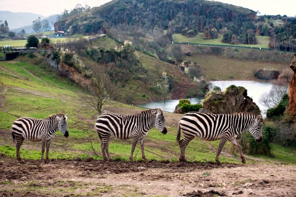 Parque Natural de Cabárceno