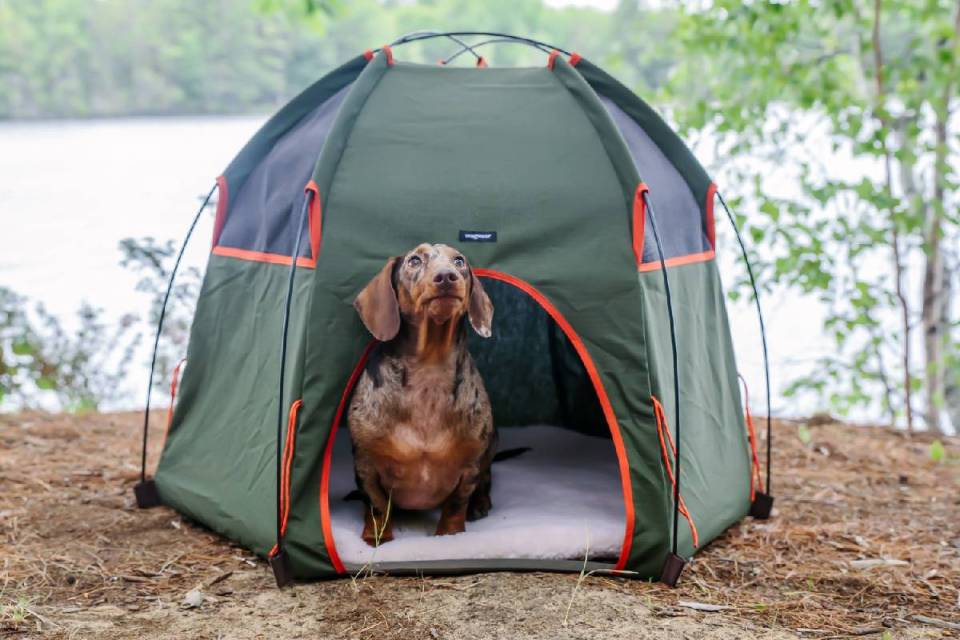 camping con perros