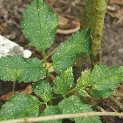 Onkruid  Tuintips  Almeer Plant
