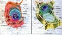 أي التراكيب الآتية يوجد فقط في الخلايا النباتيه فقط
