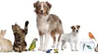 الثدييات والطيور من الحيوانات المتغيرة درجة الحرارة