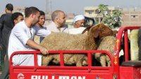 حالات خروف العيد لابس كمامه