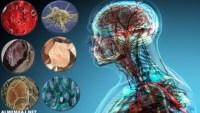 من خلال الصورة الواضحة أمامك ما هي وحدة التركيب والوظيفة في جسم الكائن الحي؟