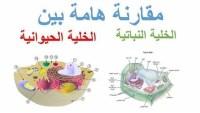تختلف الخلايا النباتية عن الخلايا الحيوانية في ثلاثة خيارات من أربعة من التالي