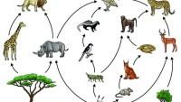 تصنف الطيور في السلسلة الغذائية