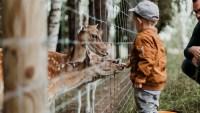 طفل يعاني من نقص في النمو ما الحل