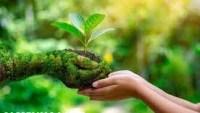 لماذا خلق الله النبات مكونا من اجزاء مختلفه