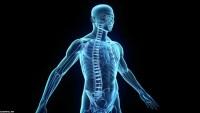 ماذا يجب ان يحدث لجزيئات الطعام لكي تتم عمليه التنفس الخلوي