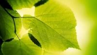 ما المواد التي يحتاج إليها النبات للقيام بعملية البناء الضوئي
