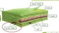مجموعه الخلايا المتشابهه التي تؤدي الوظيفة نفسها تسمى