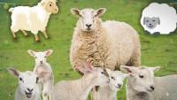 مقاطع حالات خروف العيد مضحكة جدا
