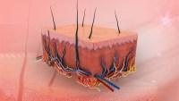 يتكون الجلد من ثلاث طبقات ويعمل على عدة وظائف ضرورية لجسم الإنسان