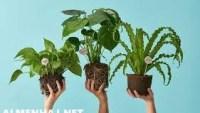 ماذا اعرف عن النباتات