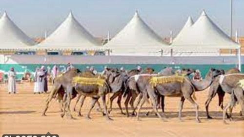 موعد مهرجان الملك عبدالعزيز لمزاين الإبل 7 2021