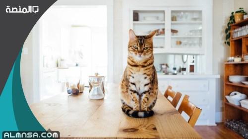 هل المكيف يضر القطط الصغيرة