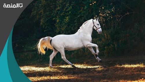 تفسير رؤية ركوب حصان في المنام