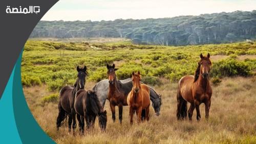 اسماء خيول عربية اصيلة