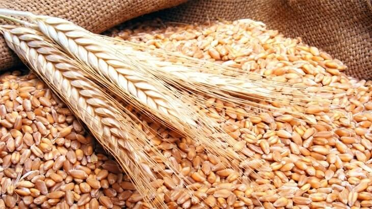 تفسير حلم رؤية القمح في المنام