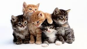 تفسير رؤية القطط في المنام للامام الصادق