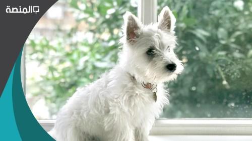 تفسير حلم رؤية الكلب الأبيض في المنام