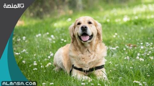 تفسير حلم فضلات الكلاب