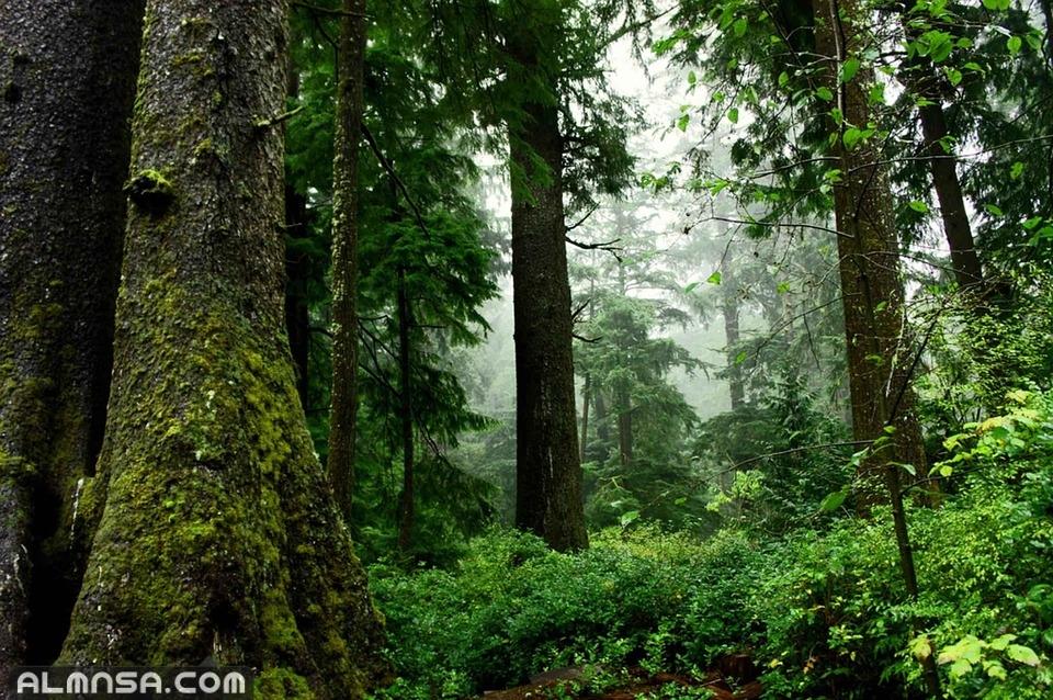 صور طبيعية جديدة اجمل خلفيات عن الطبيعة 2021