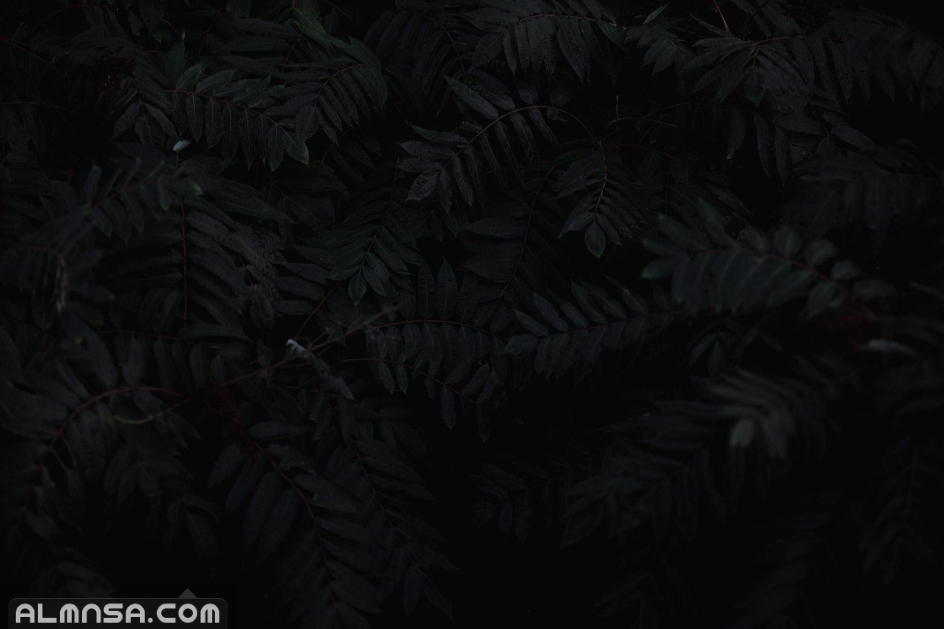 صور حداد سوداء خلفيات عزاء حزينة 2021