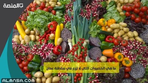 ما هي الخضروات التي لا تزرع في سلطنة عمان