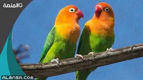 اسماء عصافير ومعانيها 2021 جميلة