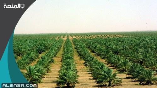 شروط استخراج صك ارض زراعية