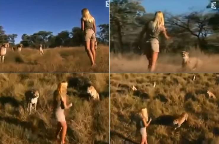 فيديو مرعب لفتاة وسط مجموعة من النمور تشتريه ناشيونال جيوجرافيك