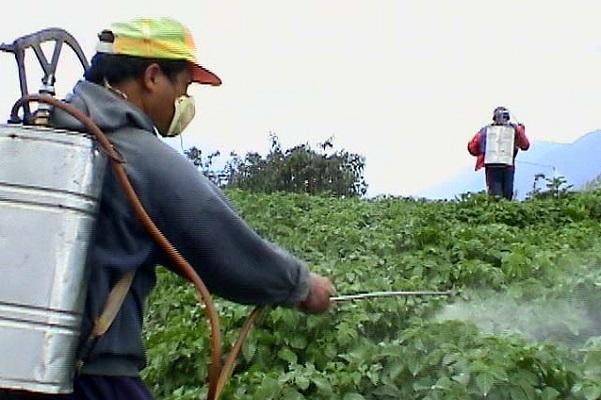 Resultado de imagen para limites maximos de residuos de plaguicidas químicos agrícolas mexico