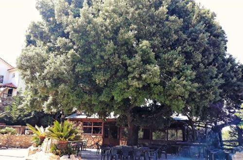 teverne în Ikaria - taverna Argios Profitis Ilias